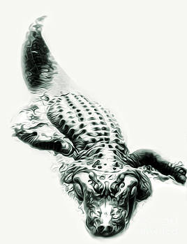Gregory Dyer - Alligator