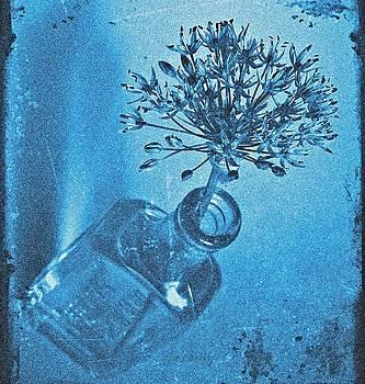 Chris Berry - Allium Cyanotype