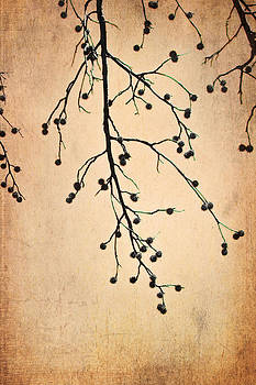 Almost Bare Branch by Suzanne Barber