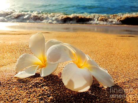 Aloha by Kristine Merc