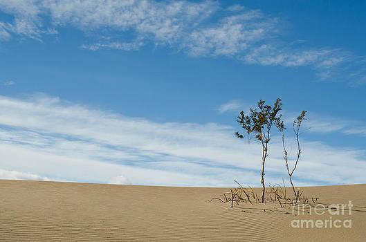 Alone in the Desert by Tiffany Rantanen