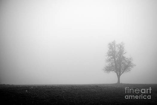Hannes Cmarits - alone in the fog - bw