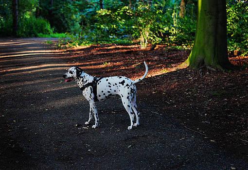 Jenny Rainbow - Alone in the Woods. Kokkie. Dalmatian Dog