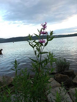 Alone on the Bank by Terrilee Walton-Smith