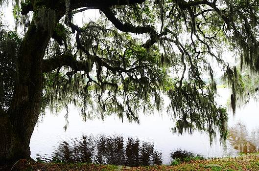 Along The Ashley River by Kathleen Struckle