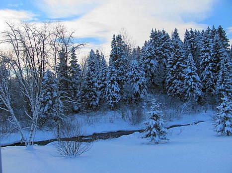 Along the Winter Brook by Sandra Martin