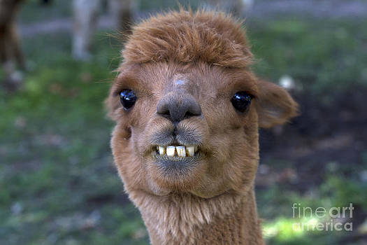 Kenneth M Highfill - Alpaca