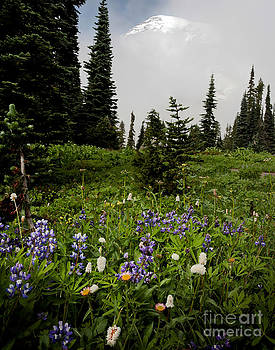 Alpine Beauty by Karen Lee Ensley