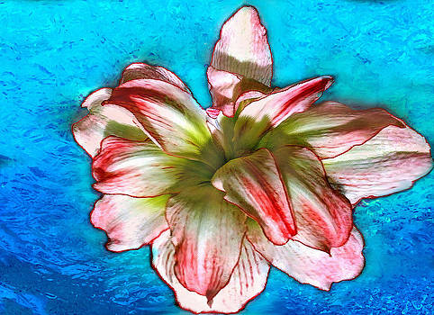Amaryllis in Blue Water by Bob and Nadine Johnston