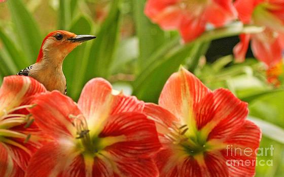 Amaryllis Flower and Woodpecker Photo by Luana K Perez