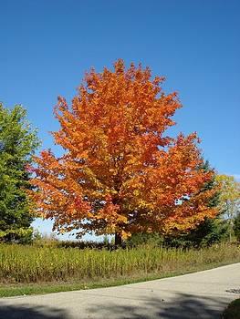 Amazing Autumn by Deni Breitenbach