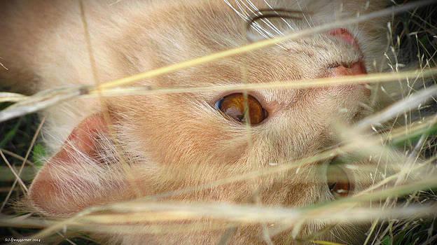 Amber Eyes by Lisa Waggoner