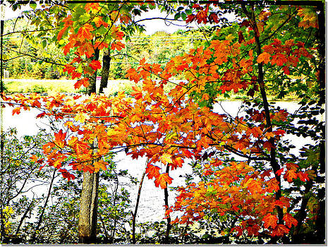 Amber Leaves  by Dianne  Lacourciere