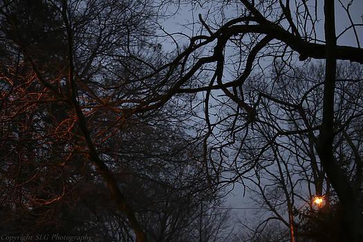 Amber Light by Stacie  Goodloe