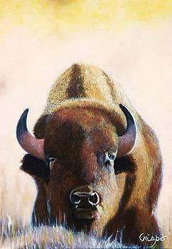 American Bison by Jean Yves Crispo