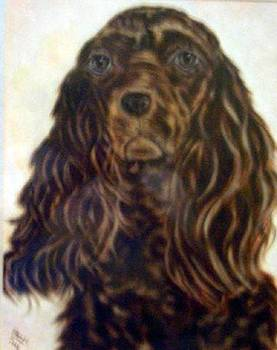 American Cocker Spaniell by Pat Mchale