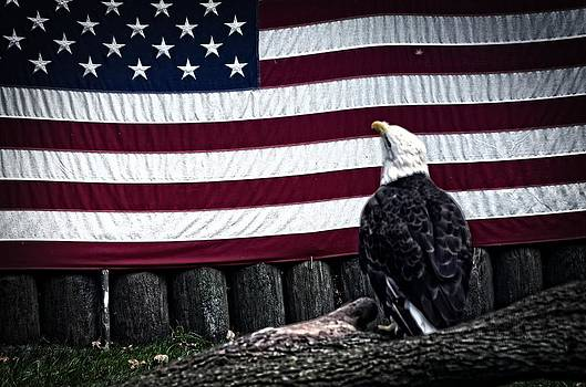 American Eagel by Cheryl Cencich
