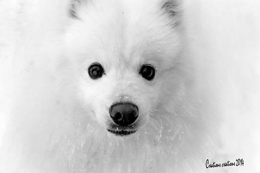 American Eskimo by Sybil Conley
