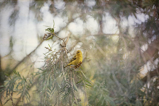 Angela A Stanton - American Goldfinch in Winter Plumage