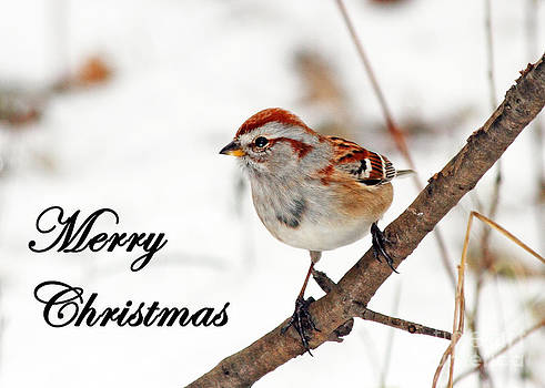 American Tree Sparrow Greeting Card by Deanna Wright