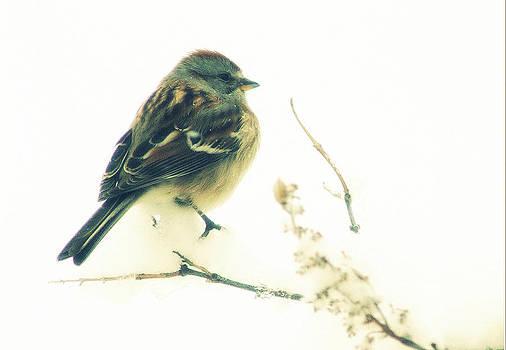 American tree sparrow by Monic LaRochelle