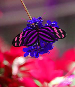 Amethyst Tiger by Beauty Balance Design