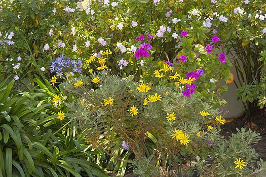 Amidst Flowers by Lauren Steinhauer