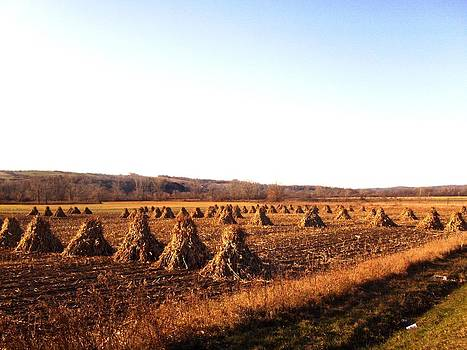 Amish Corn Field by Daniel Weaver