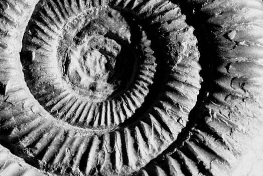 Ammonite by Derek Sherwin