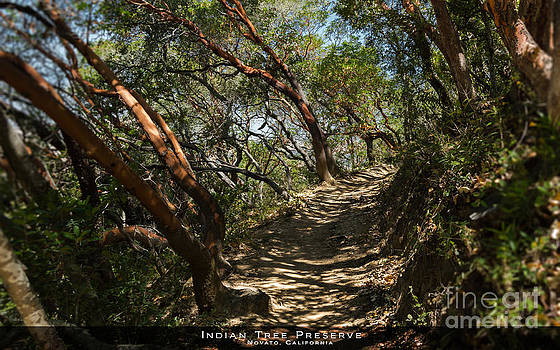 along the trail - artwork for sale