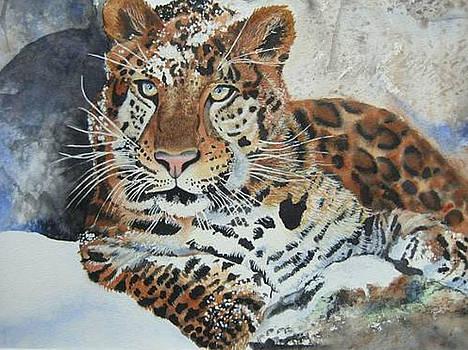Amur Leopard by Stephanie Zobrist