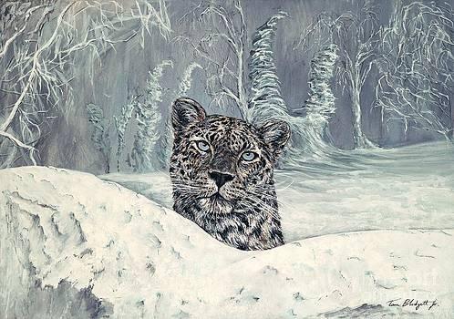Amur Leopard by Tom Blodgett Jr