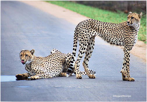 An amazing experience by Judith Meintjes