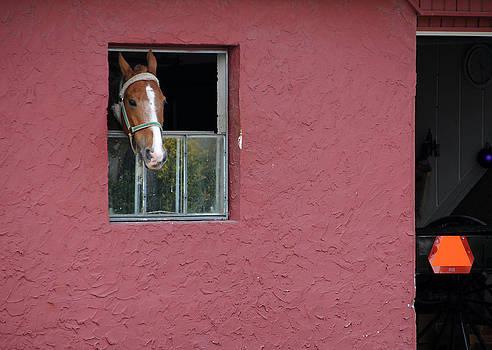 An Amish Garage by Sharon Sefton