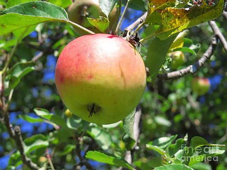 An Apple a Day by David Lankton
