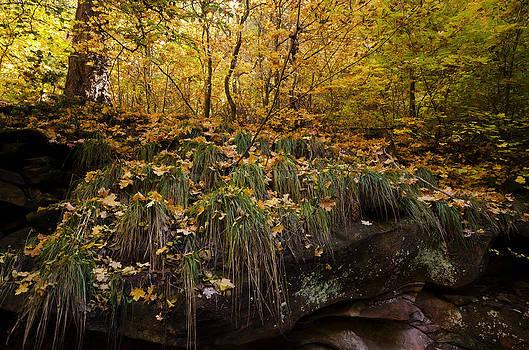 Saija  Lehtonen - An Autumn Forest