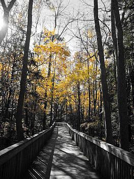 An Autumn Stroll by Lisa Merman Bender