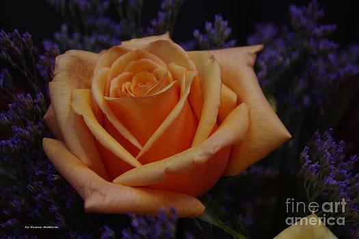 Tannis  Baldwin - An Orange Rose