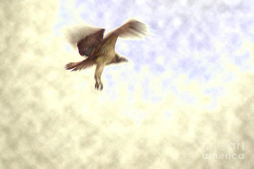 An Osprey Dream by Kim Pate