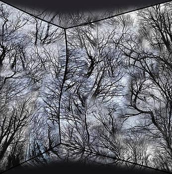 Analog Wood by Florin Birjoveanu