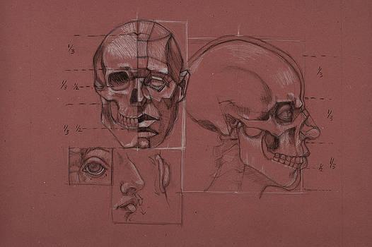 Anatomical Rendering by Katherine Moldauer