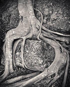 Adam Romanowicz - Ancient Roots