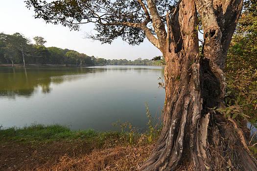 Ancient Tree Cambodia by Bill Mock