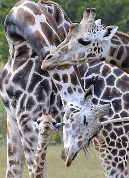 And Baby Makes Three by Lori Tambakis