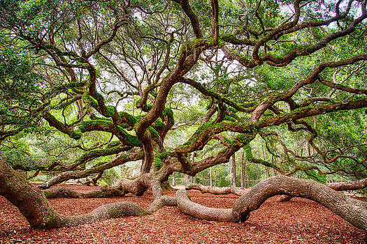 Angel Oak by Christopher L Nelson