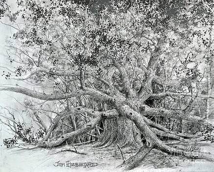 Jim Hubbard - Angel Oak