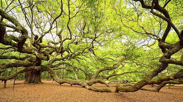 Angel Oak - Johns Island by Eric Haggart