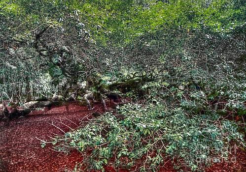 Angel Oak Tree 3 by Kathleen Struckle
