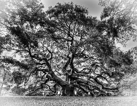 Angel Oak Tree II by Douglas Stucky