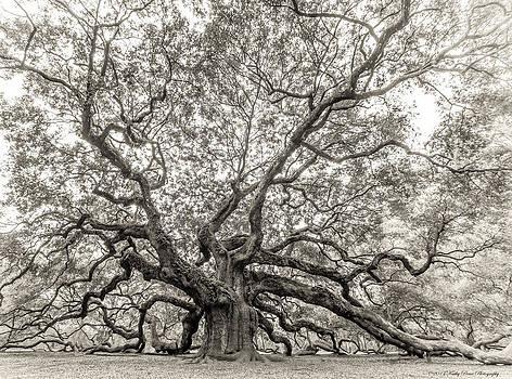 Angel Oak Tree by Kathy Ponce